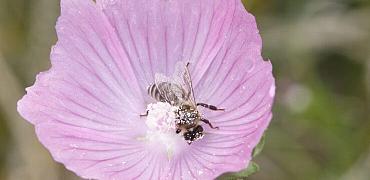 De Bonte Berm en Bijen
